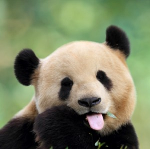 How To Deal With Google Panda