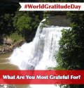 World Gratitude Day: This is Pinteresting…